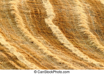 Cereal newly harvested fields - cereal newly harvested...