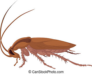 Cockroach - Vector image of big bad brown cockroach