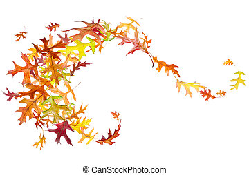 Autumn Leaves Swirl - Swirl of autumn oak leaves isolated on...