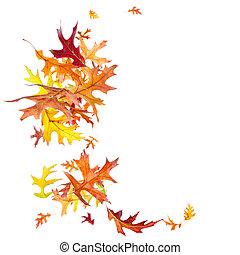 Caer, otoño, hojas