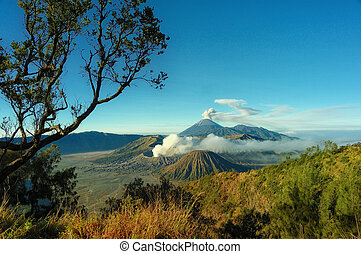 Bromo mountain and tree branch