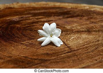 One jasmine flower on the wood.