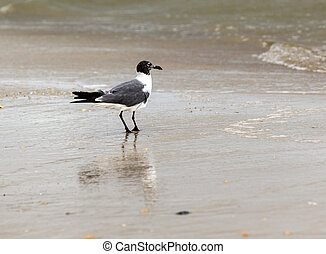 seagull walking at the sandy beach
