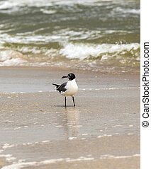 seagull walking at the sandy beach - seagull walking at the...