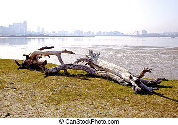 Driftwood With Durban City Skyline