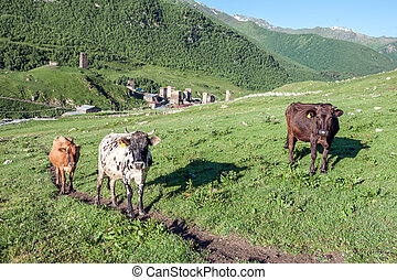 cow - three cow on green field