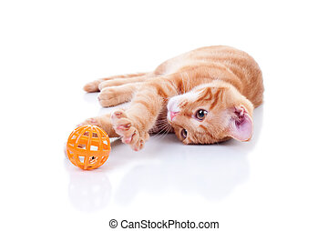 Cat Playing On White - Kitten playing with toy on white -...
