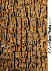 Palm tree bark detail, Arizona, USA