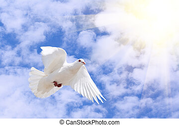 dove - a white flying dove under the blue sky