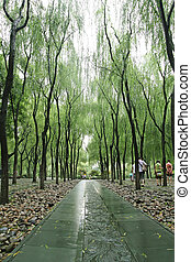 willow tree-lined path
