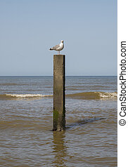 sea bird background - oceanview with seagul sitting on a...