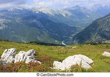 Alpine rhododendron landscape view, Julian Alps, Slovenia -...