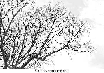 Branch of dead tree - Dead tree without leaves on white...