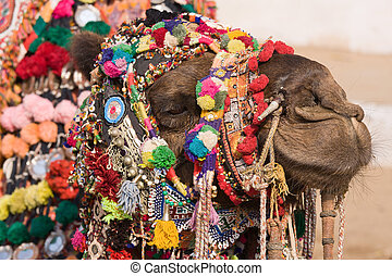 Camel at the Pushkar Fair in Rajasthan, India - Camel at the...