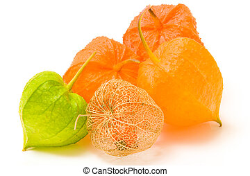 High Key Physalis - high key image of sevaral physalis...