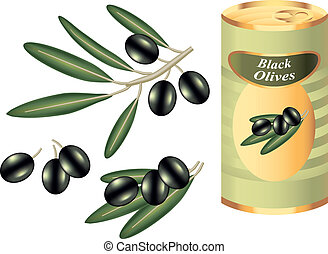 black olive branch and bank isolated on white