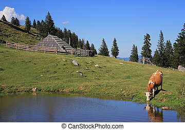 Wooden hut and drinkig cow, Slovenia - Wooden herder's hut...
