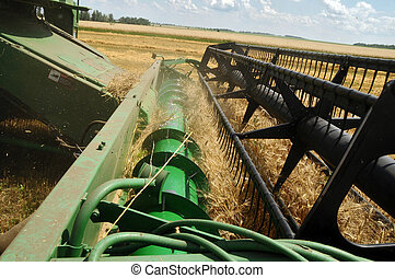 A combine loads grain in a truck - Combine removes wheat at...