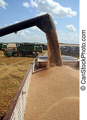 A combine loads grain in a truck