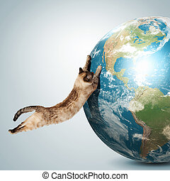 Siamese cat playing - Image of siamese cat playing with...
