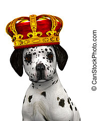 Dalmatian puppy prince - A cute dalmatian puppy with a crown...