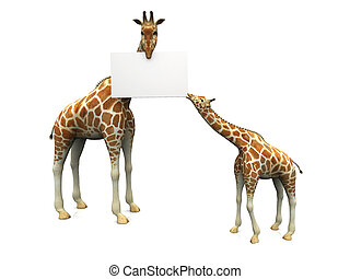 Giraffes with sign