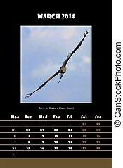 Bird calendar for 2014 - march - Colorful english calendar...