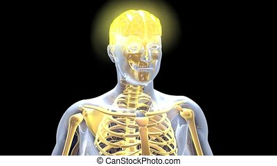 Glowing Brain - Animation of a glowing human brain.
