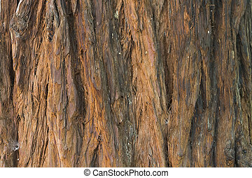 tree texture - Background with bark of linden tree texture...