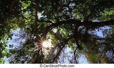 Sunlight in the Trees - Trees in the Sunlight in Mar de las...