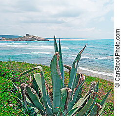 nubes,  Agaves