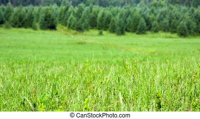 Green field of grass with heat haze Shot to RAW, wide...
