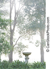 Bird bath bathed in light on a fogg - The rising sun blots...