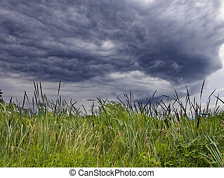 Cattails Under Bad Sky - Cattails in a marshy wetland under...