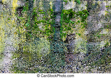 Green moss on the stone - outdoor