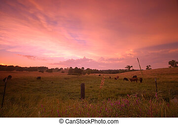 pastoral field - rural farm field