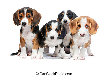 Puppies isolated on white - Four puppies isolated on white...