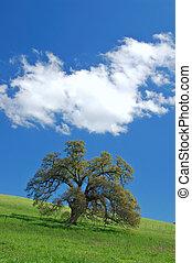 oak tree in spring - tree in a spring meadow