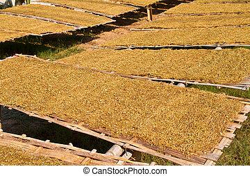 hojas, secado, tabaco