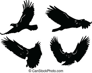 eagle in fly - Vector - Vector scroll ornament