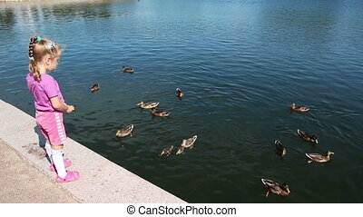 little girl feeding ducks in park