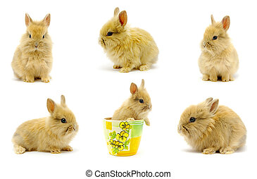 rabbits set - Small rabbits isolated on white