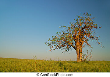 lone tree in California\'s Central Valley in late afternoon