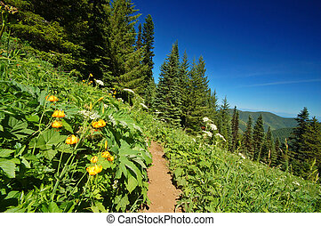 hiking trail in the mountains - Tiger Lilies, Lilium...