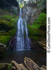 Waterfall in the forest of the Olympic Peninsula of...