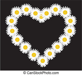 Daisy flower heart