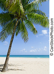 Caribbean beach - tropical sandy beach by the ocean with a...