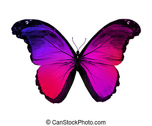 Red violet butterfly, isolated on white background
