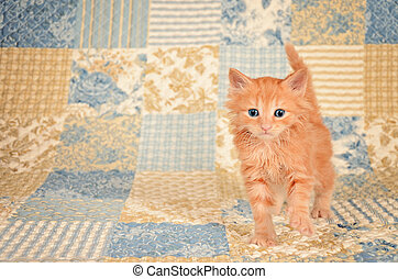 Ginger Kitten on Quilted Background - Orange kitten with...
