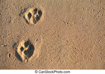 Animal tracks - Two paw prints in the sand surface